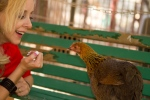christine-befriends-chicken